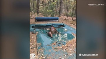Swimming pool saves horse's life from Camp Fire