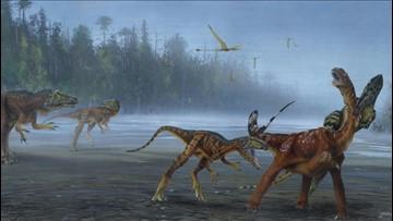 New Species of Allosaurus Unveiled