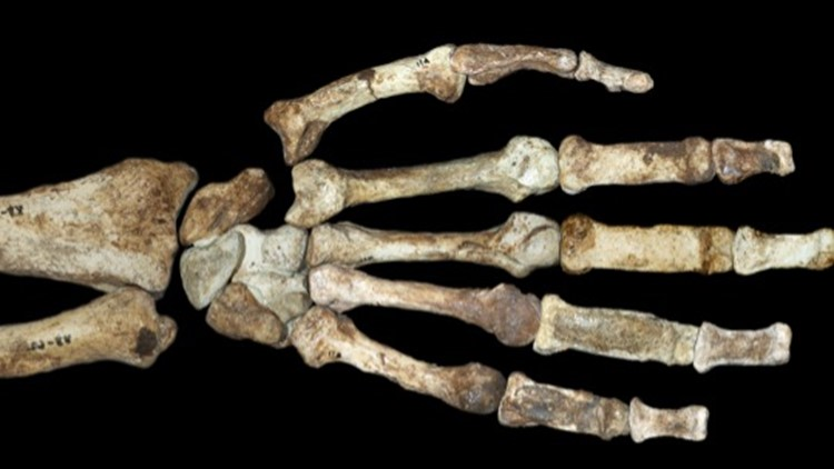 Before Opposable Thumbs, Did Early Humans Have Stone Tools?