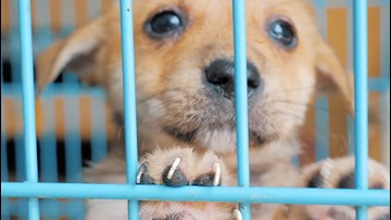 5 Simple Ways to Help Animals in Need This 'Dogtober'