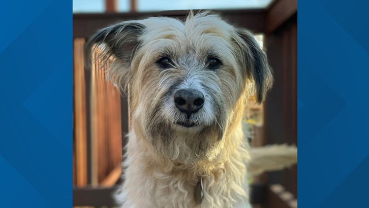 Aging Dogs Study rescue dog Maryland