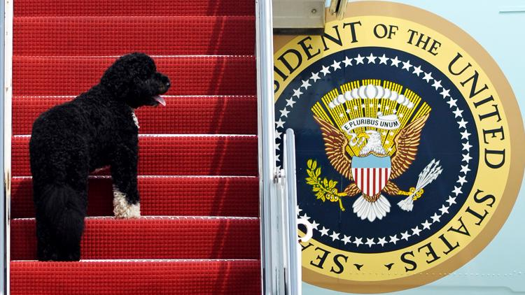 'He was exactly what we needed' | Obama's family dog Bo dies from cancer