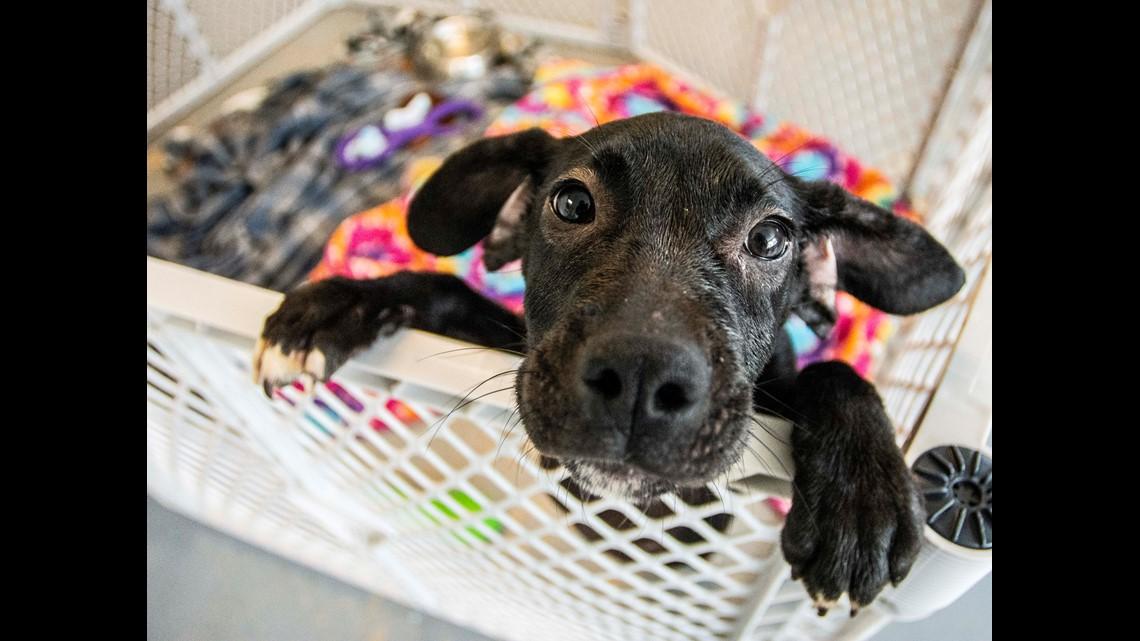 Emaciated' dog rescued near U S  35 in Wayne County | wusa9 com