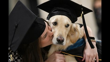 Good boy! Service dog Griffin gets an honorary diploma from Clarkson University