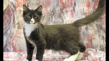 7 lovable kitties to adopt now in Washington