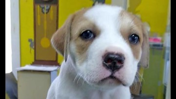 Puppies in Washington looking for their fur-ever homes