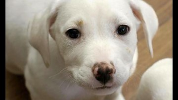 These Washington-based puppies are up for adoption and in need of a good home