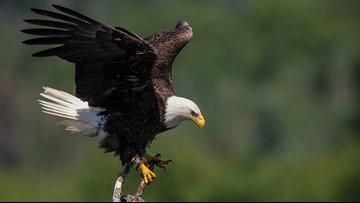 Trump overhauls endangered species protections