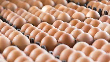 Eating eggs daily increases risk of heart disease, early death: study