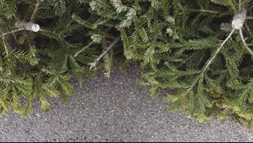What to do with your Christmas tree after the holidays