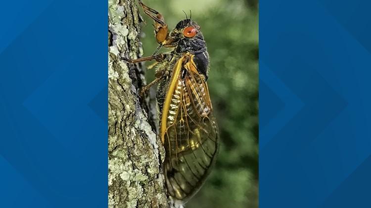 Cicada causes car to crash in Cincinnati, police say