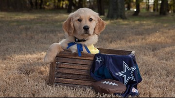 Meet Dak, the puppy training to assist a military veteran suffering from PTSD