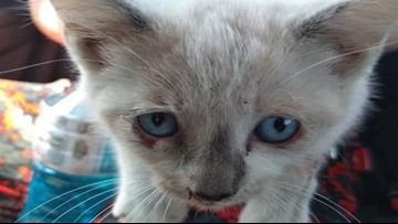 Kittens being thrown from bridge in NC, sheriff says