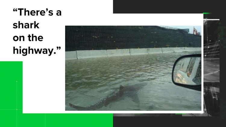 VERIFY: Shark on Highway