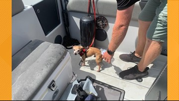 Dog named Dorian rescued from waters of marina ahead of hurricane