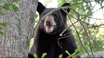9 charged in Fla. with baiting bears, letting dogs attack them