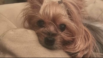 Family says FedEx driver threw package over fence, killing 4-pound dog