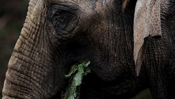 Man crushed to death by elephant after whipping it to sit down