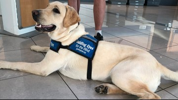 Soon they'll be service dogs. But Monday, they had to tackle airport security