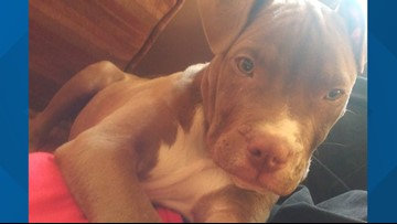 Riverdale Park Police ask for community help to find a stolen puppy