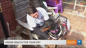 Helping service dogs keep healthy eyes so they can continue to help others