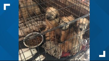 80 dogs saved from suspected puppy mill in Fauquier County