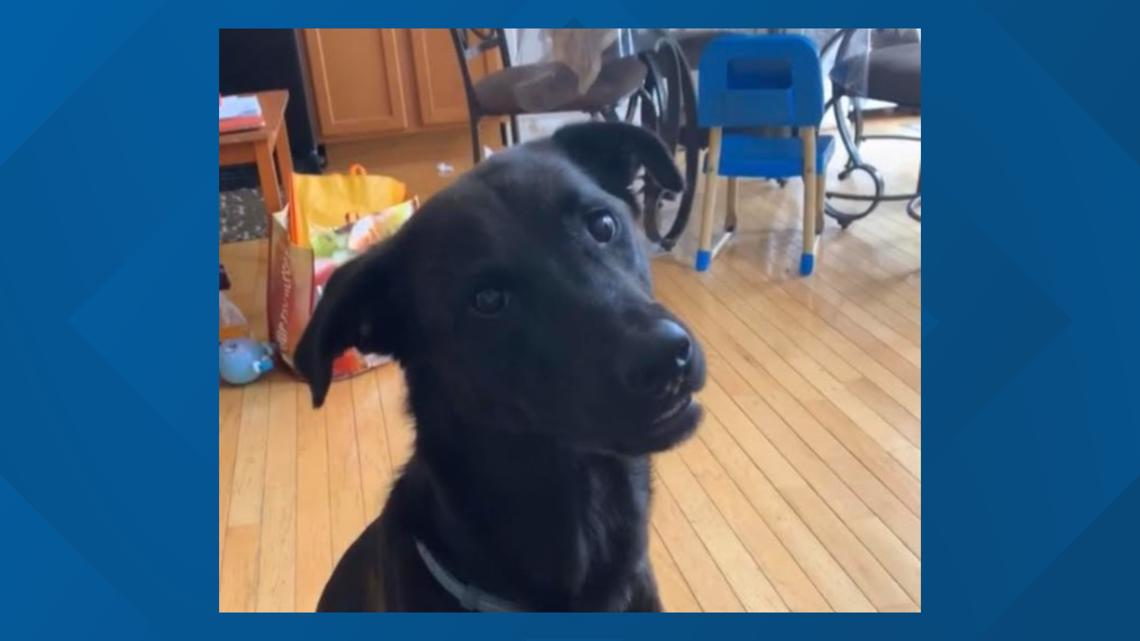 'We want him back' | Neighbors fight to keep dog from being euthanized