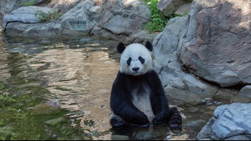 Here's how animals at the National Zoo stay cool in DC's heat