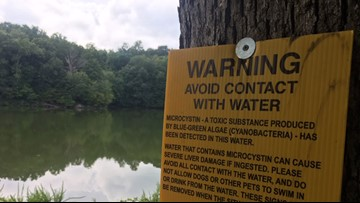 New EPA app helps warn you about toxic blue-green algae