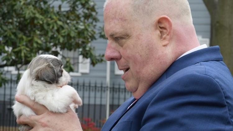 Hogan stares at puppies