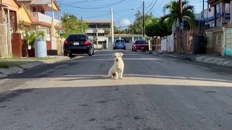 White dog in Puerto Rico