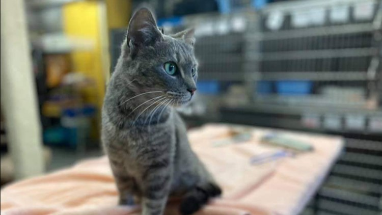 Adorable cat hitches a ride on Falls Church REI truck | Get Uplifted