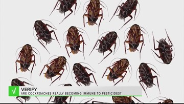 VERIFY: Yes, cockroaches are becoming immune to pesticides. But that doesn't mean they're unstoppable