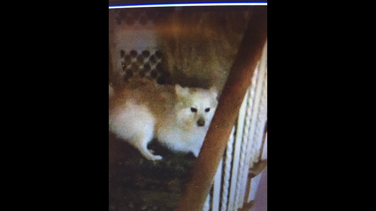 Dogs seized from NorthWest DC home