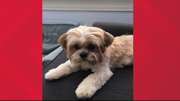 FOUND: Dog missing for over 10 days in DC