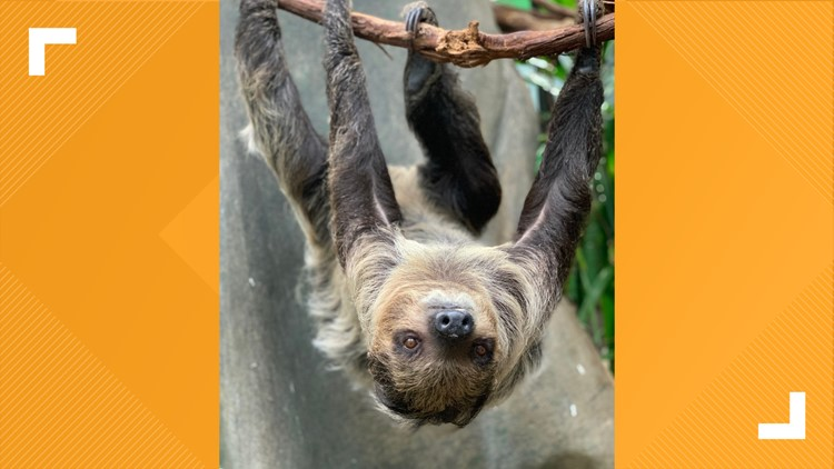 Athena sloth