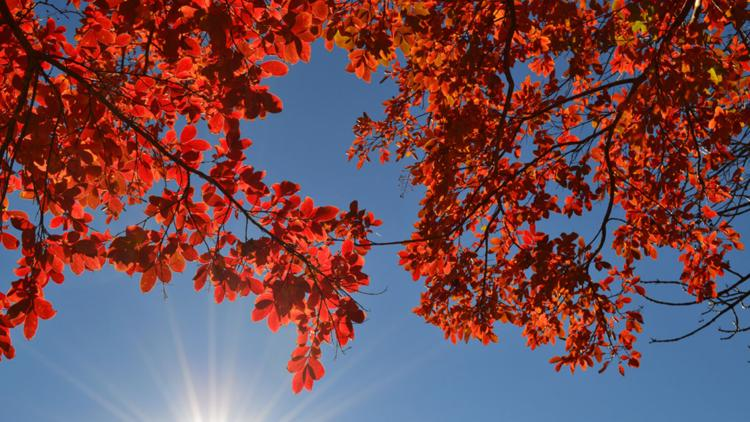 Here's when fall foliage usually peaks in the DMV