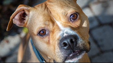 Humane Rescue Alliance in desperate need of adopters