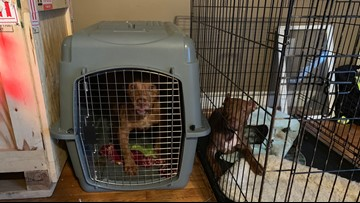 Six dogs rescued from poor, unsanitary conditions in Northeast home