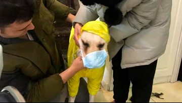 VERIFY: Are our pets at risk of getting the latest strain of coronavirus?