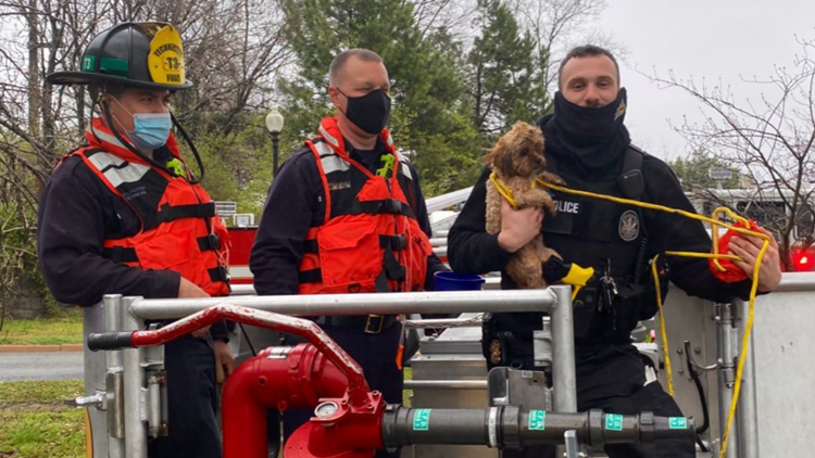 Adorable photos: Dog rescued near Potomac River by DC Fire and Rescue, US Park Police
