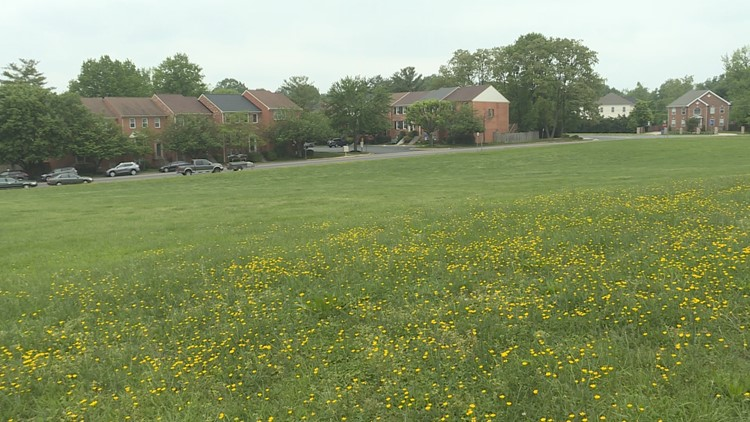 Field of buttercups at Blake Lane Park