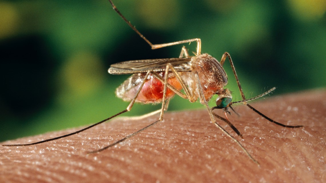 Feeling itchy? Washington's in the top 3 mosquito areas