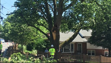 Award-winning 100-year old tree damaged in storm