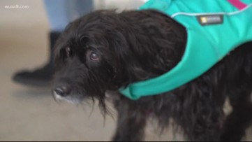 How to prevent your pets from spreading coronavirus