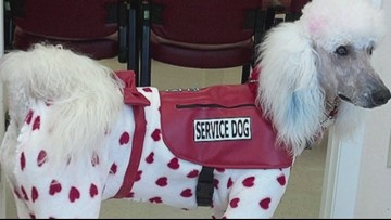 Fake service dogs are becoming a problem | wusa9.com