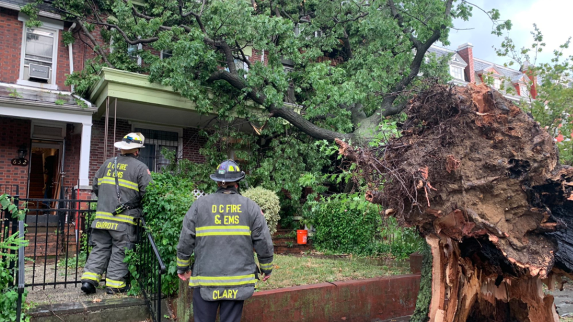 Rotting tree topples, damages 3 homes ; residents blame DC inspectors for ignoring signs