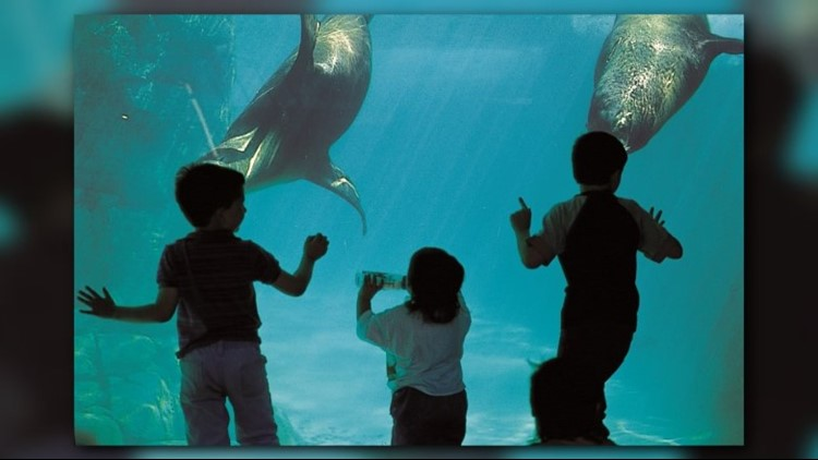 CHildren enjoying the seals at the Pittsburgh Zoo