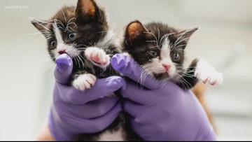 Kittens found in a box and rescued by firefighters are almost ready for adoption