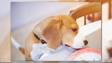 Poison control tips for your pets